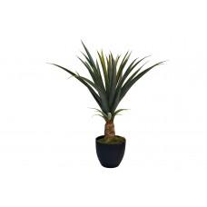 Куст ананаса в горшке 29BJ-905-39