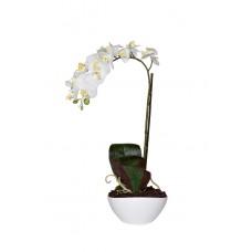 Орхидея белая в горшке 29BJ-170-06