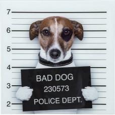 """Картина стекло """"Bad Dog"""" Kare 37289"""